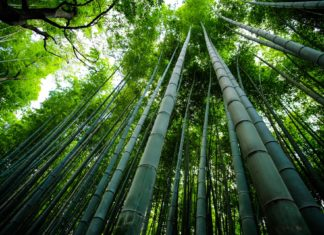 Arashiyama bamboo grove in Japan